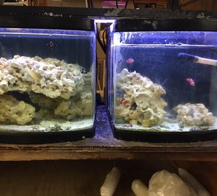 Tropical Fish And Aquarium Supplies Birmingham Al Ed S